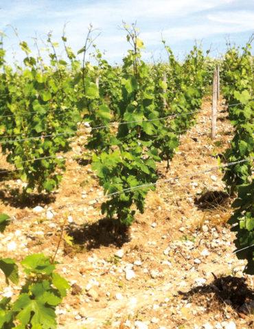 Vignoble de l'Orléanais, Clos Saint Fiacre